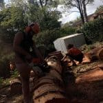 cutting tree branches -2
