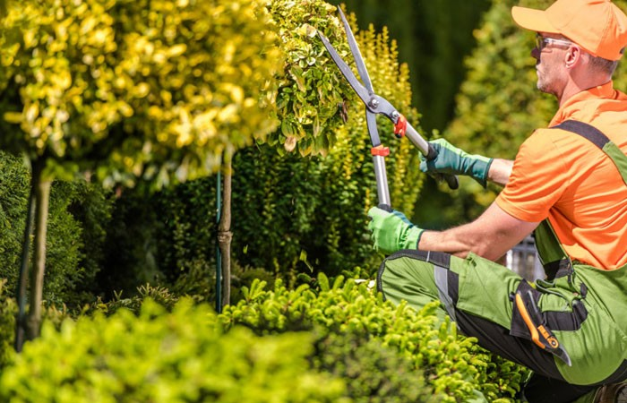 Tree Services Fairfield West