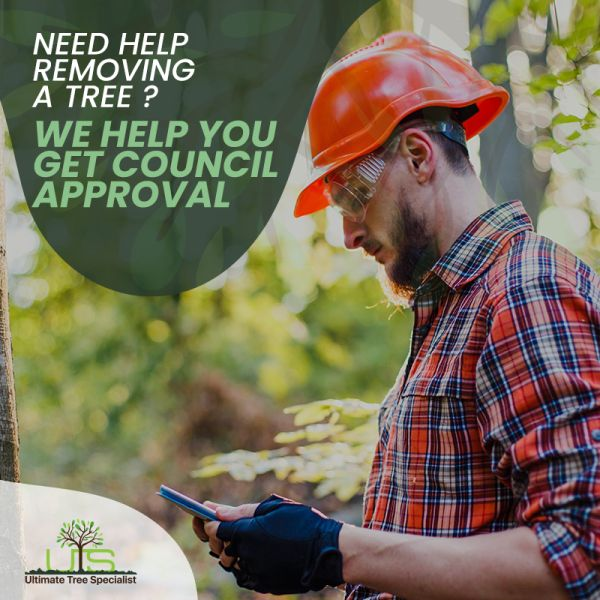 tree removal council approval
