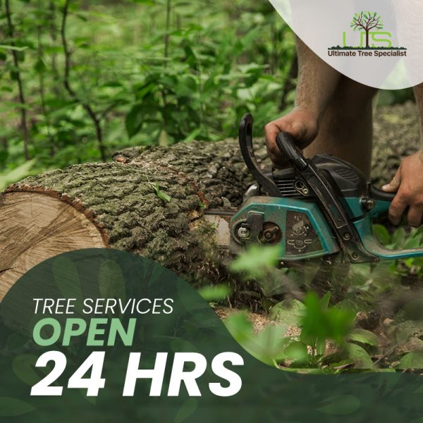 tree services open 24 hrs